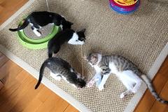 Kissi, Bella, Stella und Chaplin.