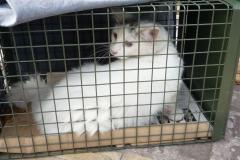Snowball, eine sehr zutrauliche Katze, wird spaeter ein Zuhause finden.
