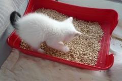 ihre kleine Katzentoilette.